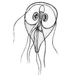 enterobiasis Rospotrebnadzor