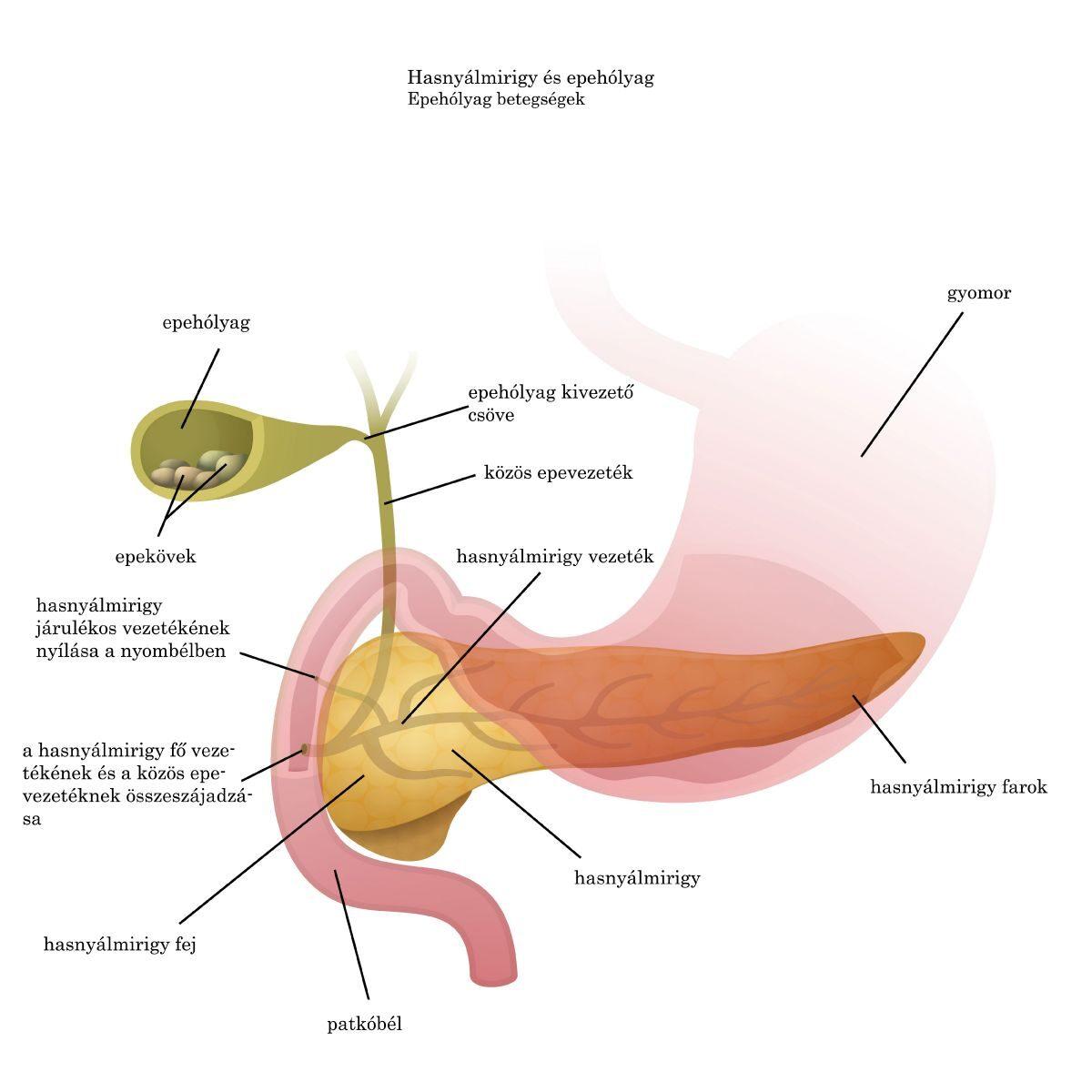 férgek a tüdőben tünetei és kezelése fascioliasis elterjedési területe