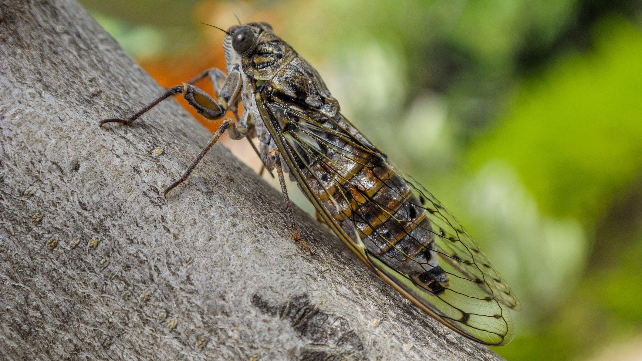 Óvatos paraziták. Te tudsz róla, hogy benned van-e parazita?? | Alga Egészség