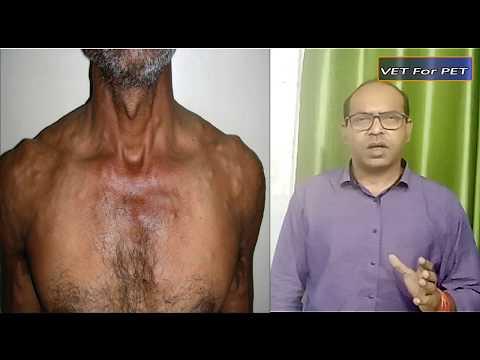 Helminth betegség tünetei. Ostorféreg-fertőzés - A helmint fertőzés diagnosztizálása