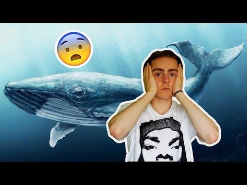 a bálnák parazitáik