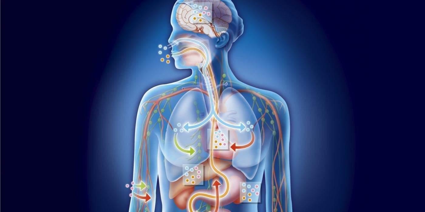 a méregtelenítés fő szerve a testben paraziták helminták kezelése