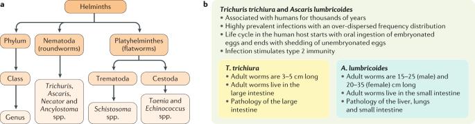 mi az anti ascaris népszerű parazitaellenes szerek