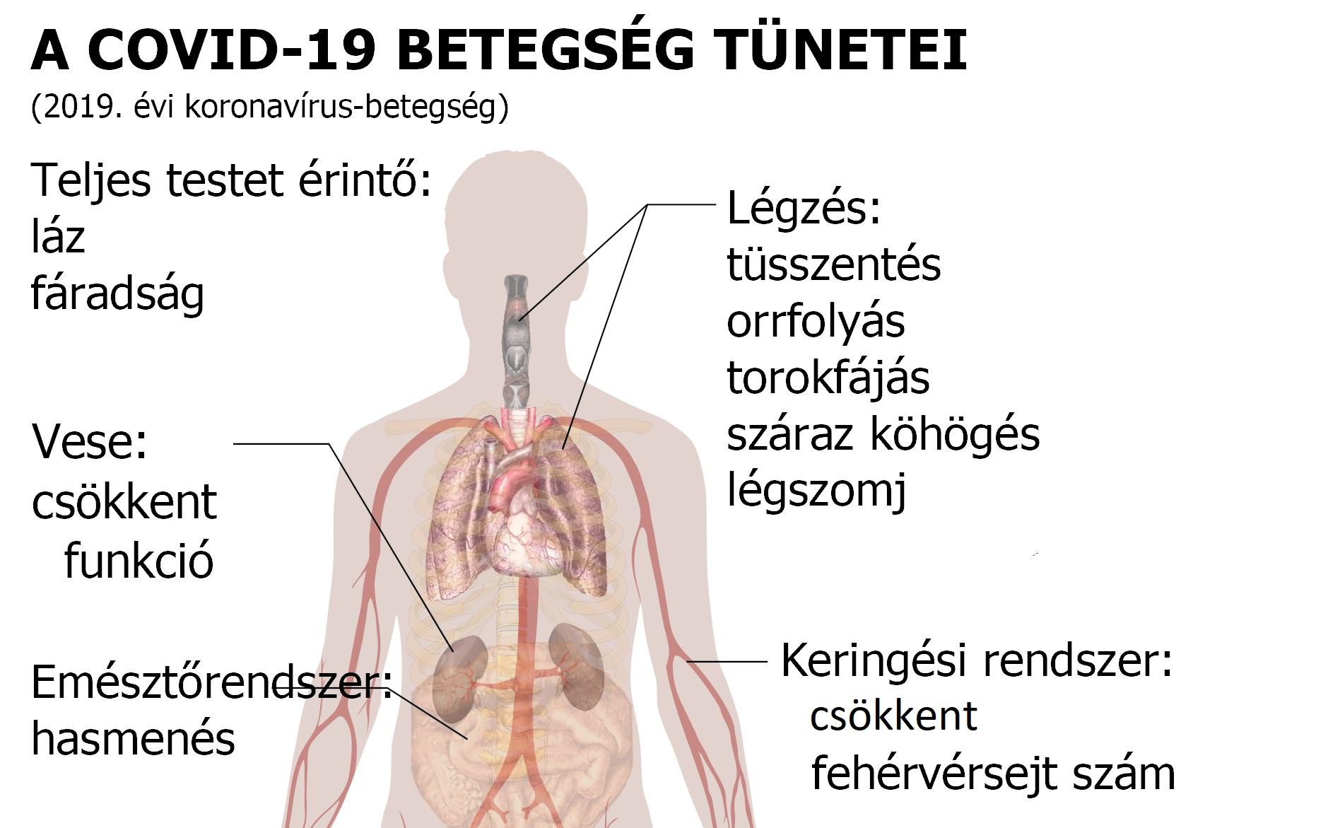 paraziták tünetei az emberi testben kb