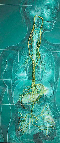 Kellemetlen rothadt szag a szájból - Hogyan jut be a pinworm a testbe