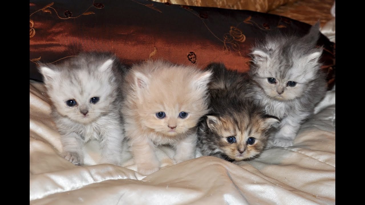 hogyan lehet megszabadulni a parazitáktól egy macska számára