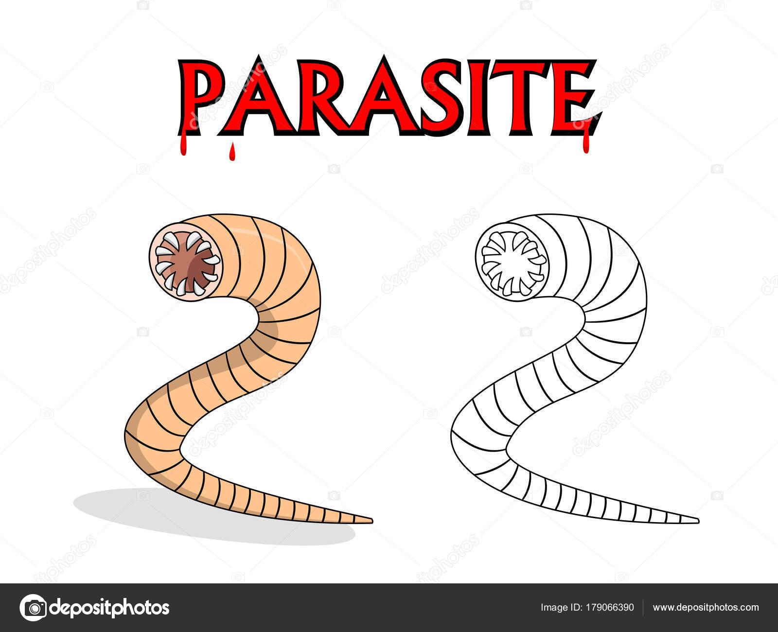Férgek, kukacok az élő testben - Annelids paraziták - Annelids férgek