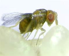 Kezelje a parazitákat fűvel - Kutyákat érintő paraziták – kullancs- és bolhairtás