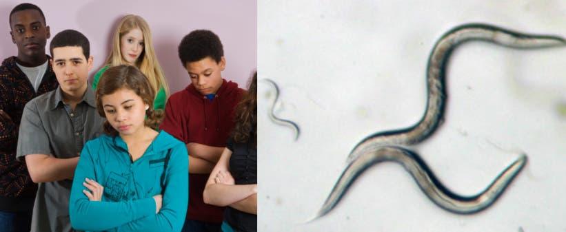 pinworm parazitál az emberen kijöhet- e a parazita az orrból