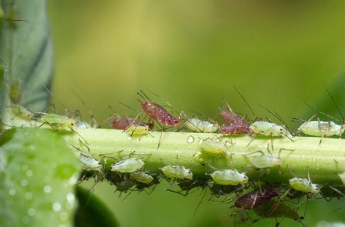 Hatékony gyógyszerek a paraziták ellen a testben