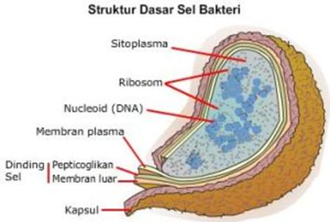 saprotrofák paraziták Vibrio cholerae emberi ajakparaziták