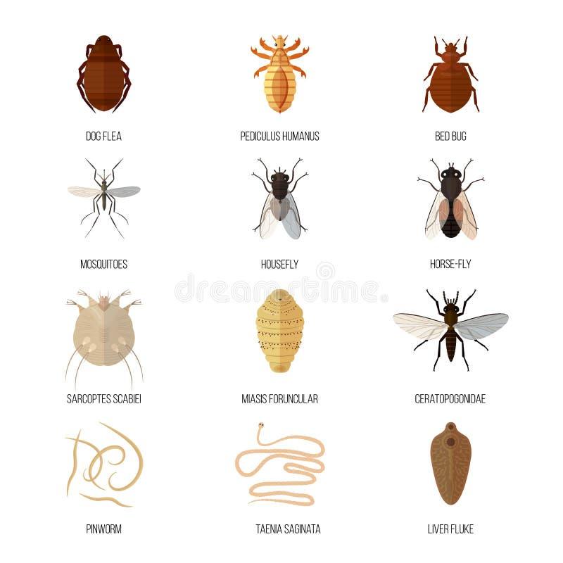 Gyógymód a pinworm és a roundworm ellen, A pinworms és a roundworms különbsége