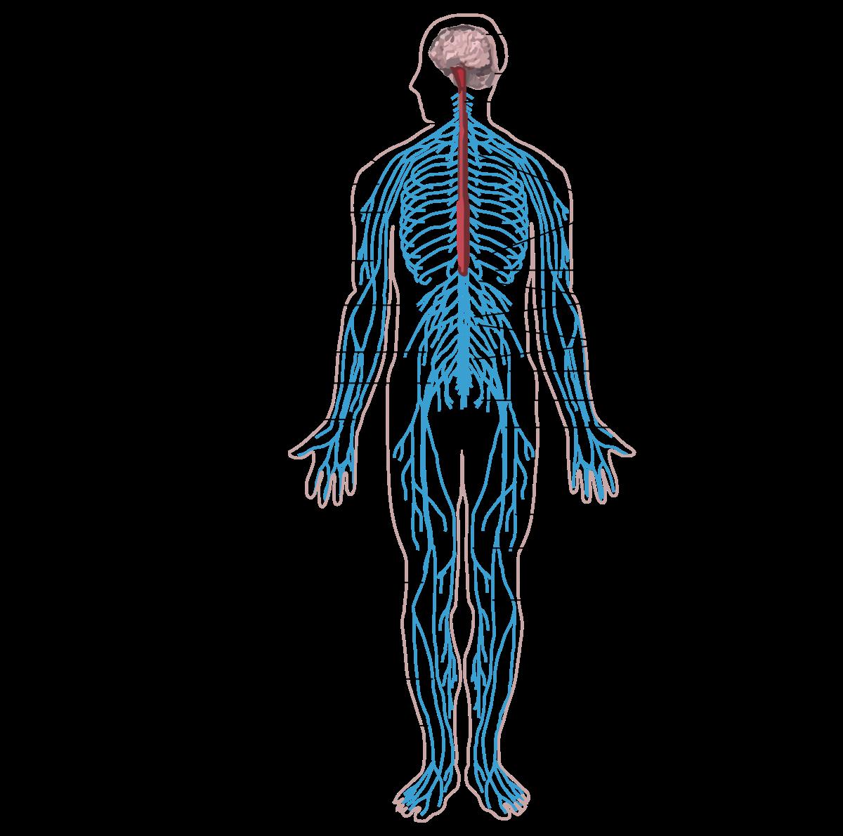hatékony gyógymód az emberi testben lévő pinwormok ellen parfüm a lélegzethez