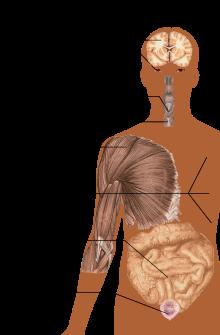 hogyan kell kezelni a giardiasis