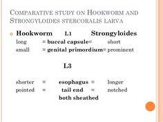 Strongyloidosis morfológia. Az orvosi mikrobiológia tankönyve | Digitális Tankönyvtár