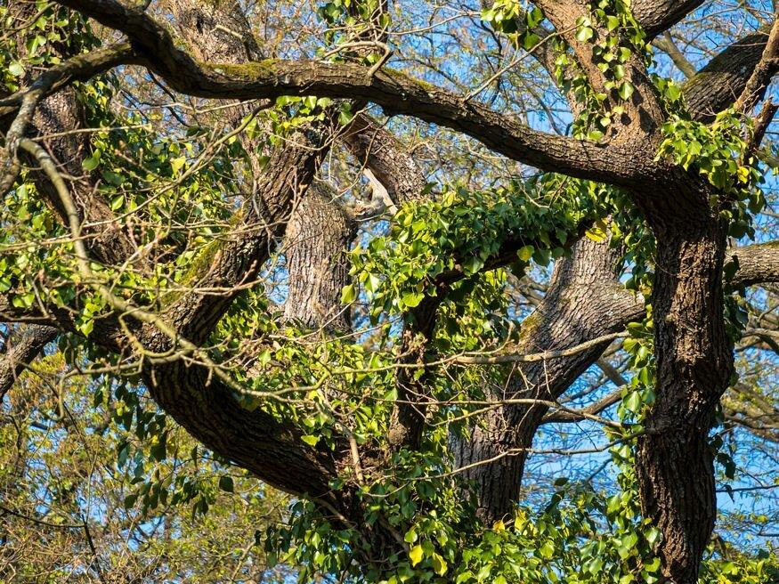 a fákon növő paraziták