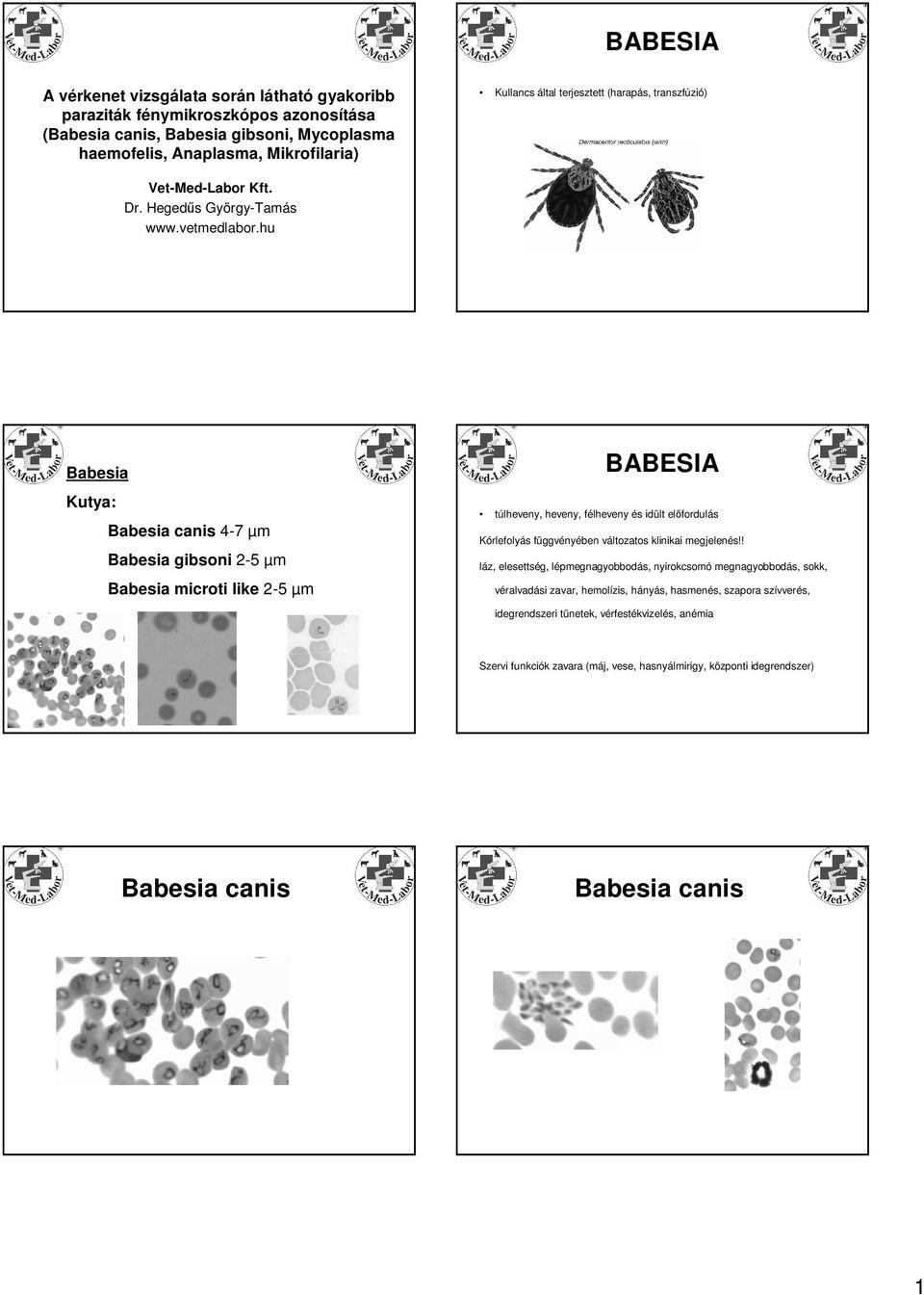 paraziták a szerológiában