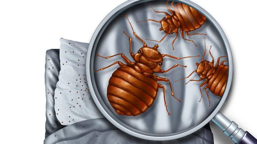 a párnában élő paraziták shinichi a parazita