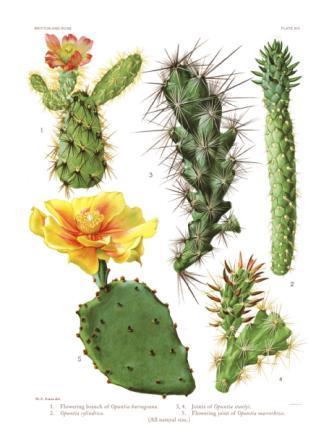kaktuszok és paraziták elkapja a rossz leheletet