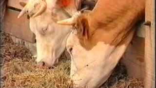 szarvasmarha galandféreg hogyan lehet megszabadulni a drogoktól paraziták a bbc- n