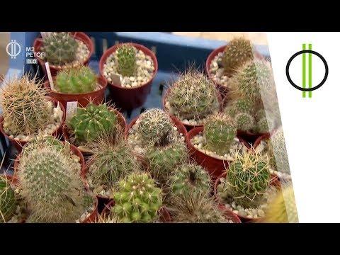 a gyógynövények megszabadulhatnak a parazitáktól akik mezei paraziták