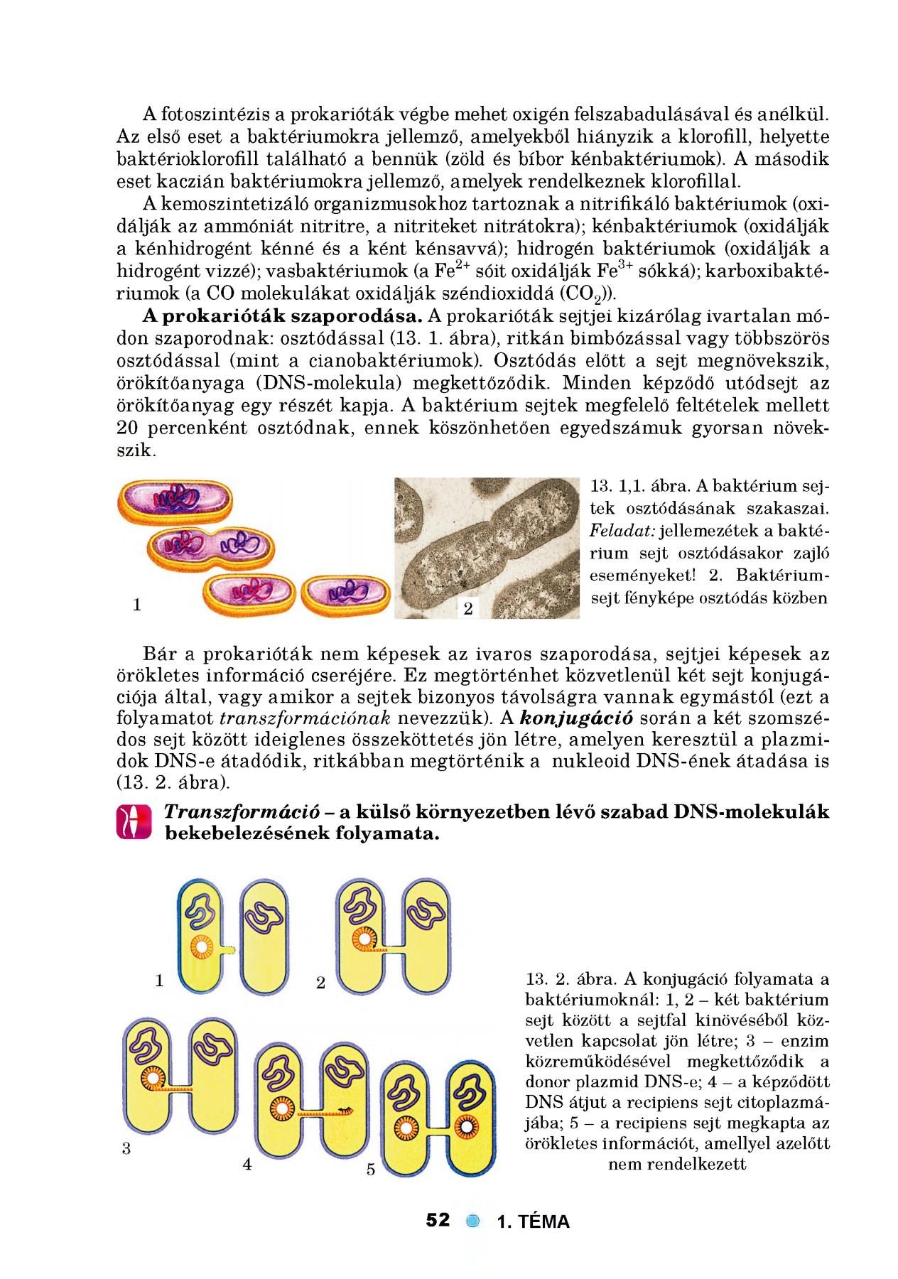 Az emésztőrendszerben élő parazitákból származó források