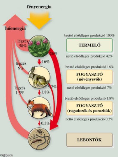 a parazita organizmusok táplálkozási jellemzői rossz lehelet tünetei