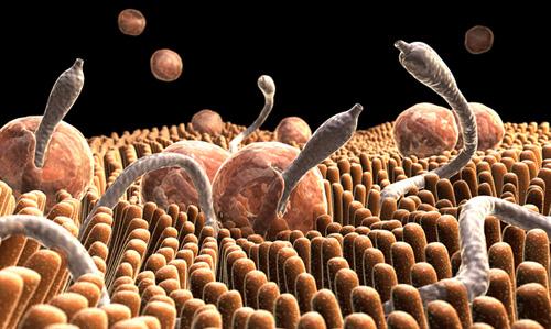 a paraziták kialakulásának okai