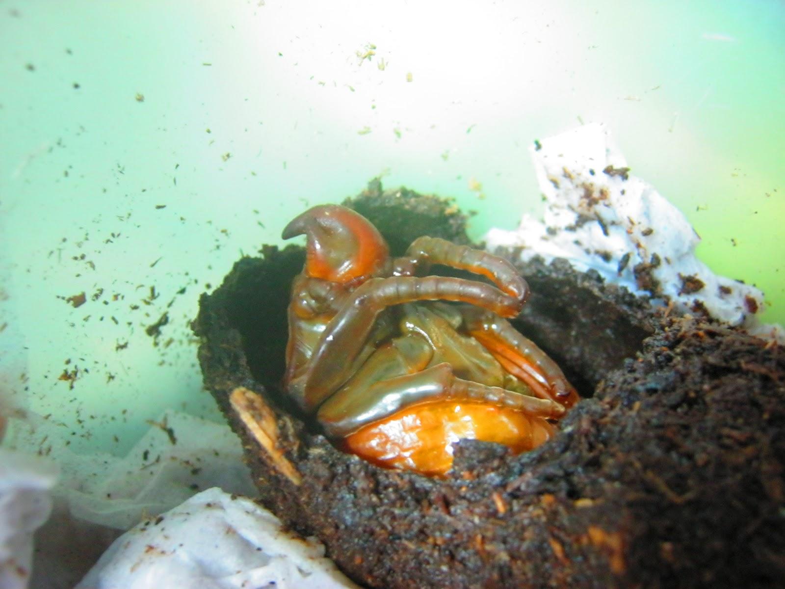 a pinwormok megfertőzésének módjai bélszöveti paraziták