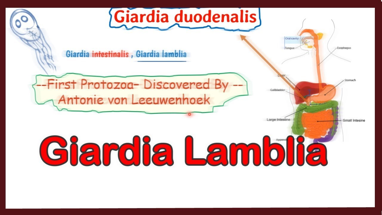 Ízületek giardiasis - rgmania.hu, Enterotest giardiasis esetén