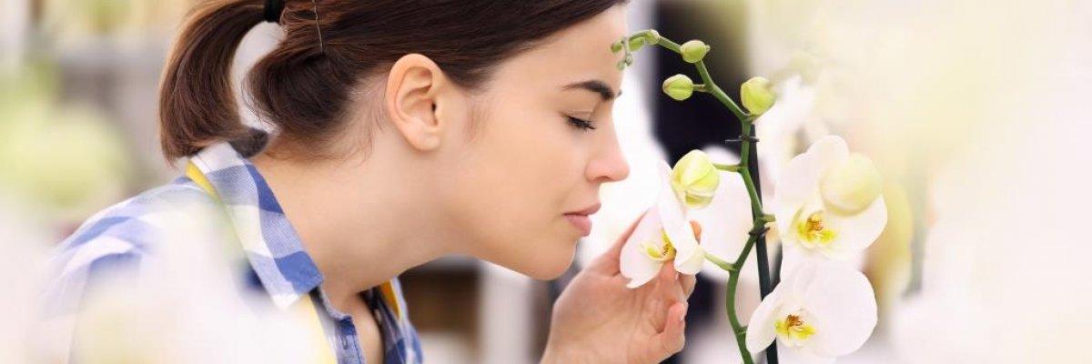 Plázs: Kilenc ok, amiért nem érezzük a szagokat | rgmania.hu