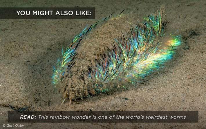 A pinworm kiszállt