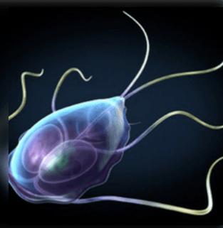 parazita a perineumban