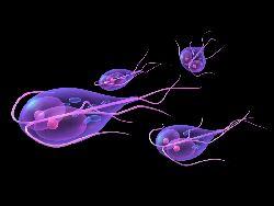 a paraziták testben való jelenlétének tünetei