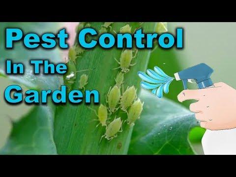 ne hozzon pinwormokat pinworms hogyan és hogyan kell kezelni