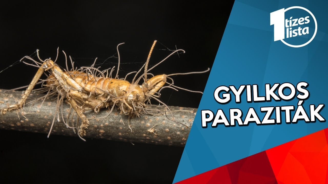 Ezerjófű Parazita alkoholos tinktúra 50ml