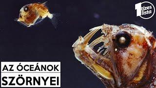 pinworm életszakasz