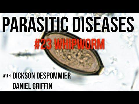 paraziták nyomai a testen milyen gyógynövények tisztítják a paraziták testét