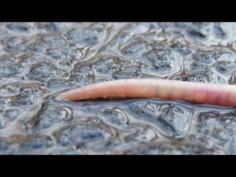 paraziták a testben és kimutatásuk módszerei